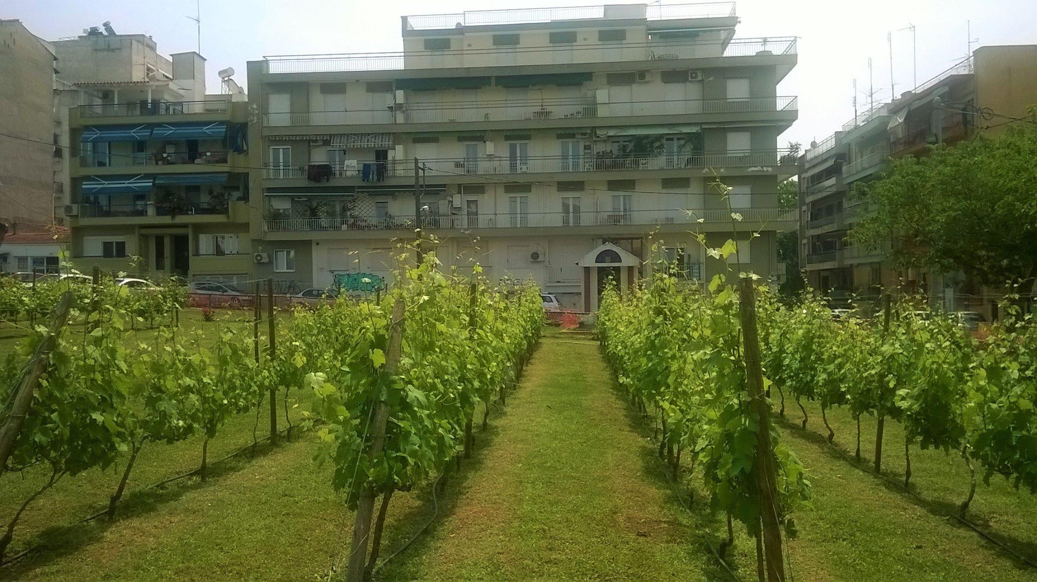 Το πρώτο αστικό κρασί στην Ελλάδα!